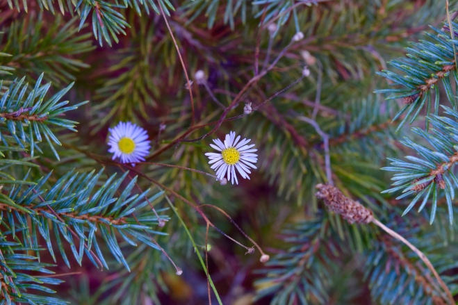 flowers growing in a douglas fir tree christmas tree farm