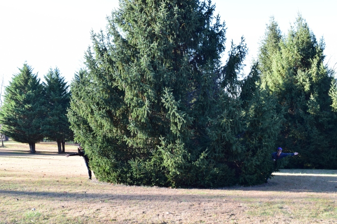 huge pine tree at christmas tree farm