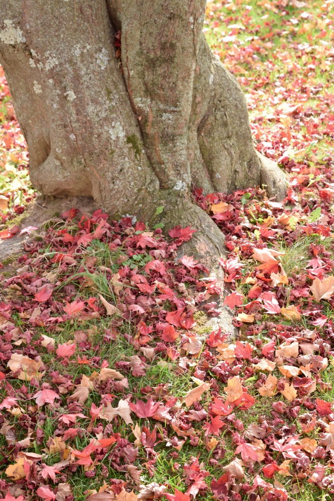 fall leaves around a tree trunk